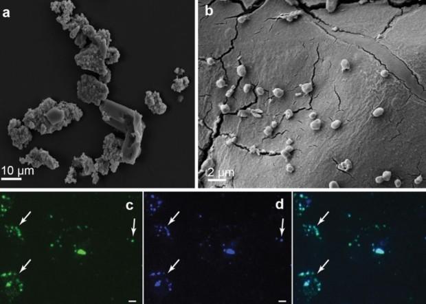 Эти таинственные микробы могут жить на метеорите
